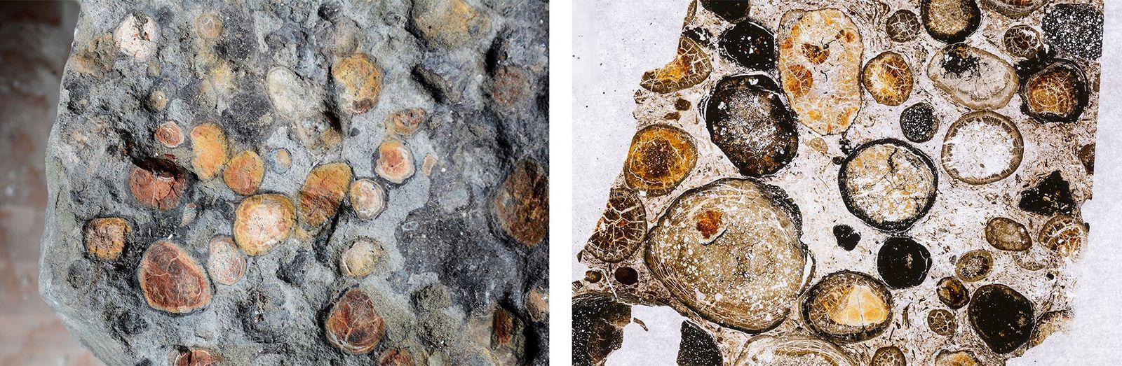 Esquerda: O conteúdo intestinal do Borealopelta inclui seixos que o dinossauro ingeriu para ajudar a desfazer ...