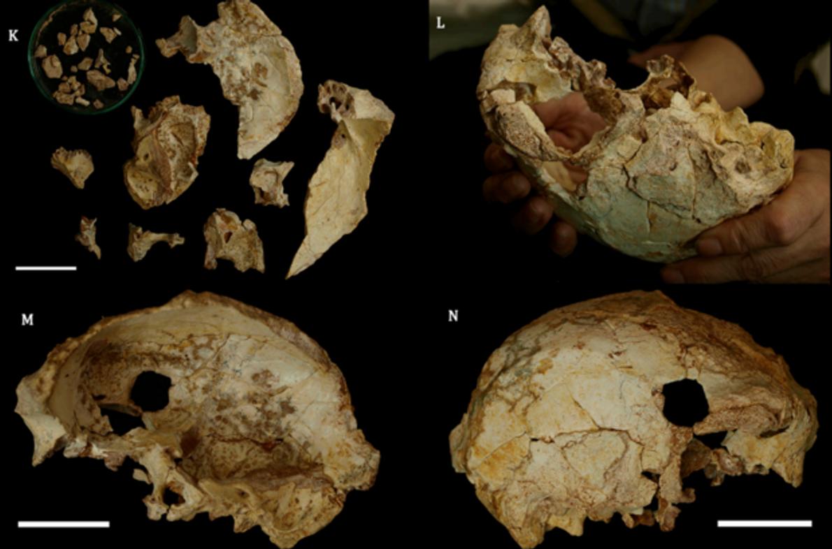 Crânio da gruta da Aroeira, com 400 mil anos.