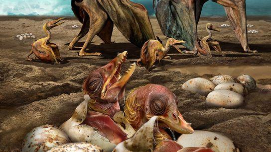 Reconstituição de um pterossauro