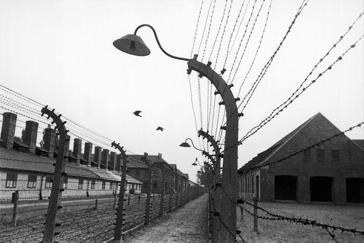 Quando Edith Friedman e as outras raparigas chegaram a Auschwitz, não sabiam inicialmente que eram prisioneiras. ...