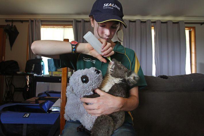 A voluntária Minka Macaule, de 14 anos, alimenta um jovem coala ferido no Parque de Vida ...