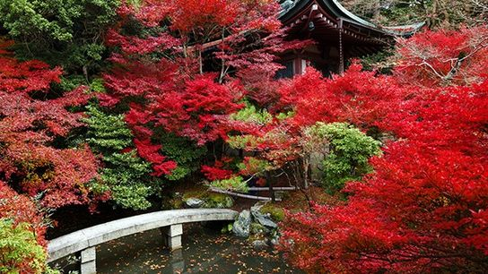 Top 10: Locais para Ver Folhas de Outono