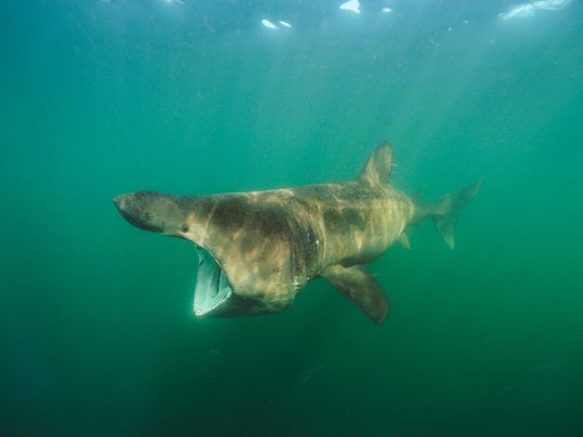 Fotografias deslumbrantes de tubarões
