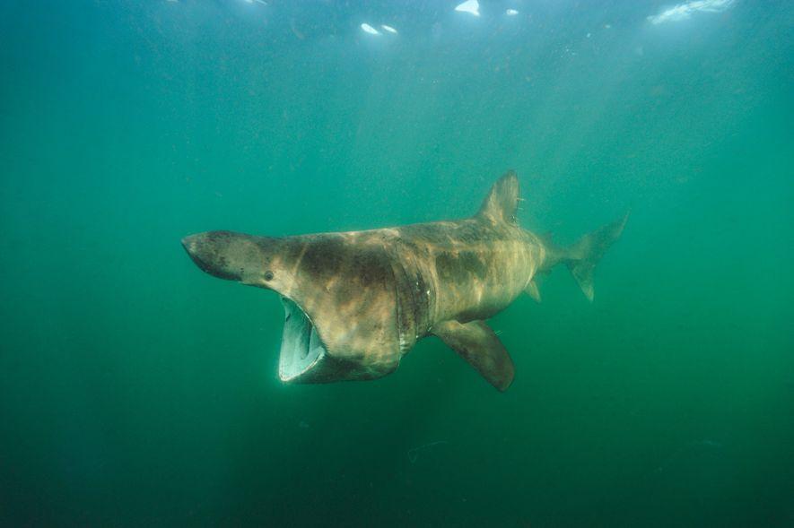 Tubarões de A a Z: Uma Galeria Intimidante