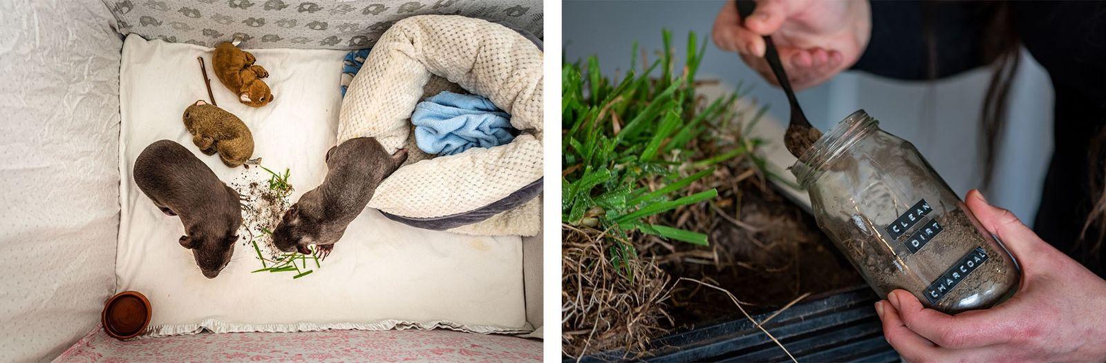 Esquerda: Landon e Bronson mascam ervas que Emily colocou no seu cercado. Emily vai cuidar dos ...