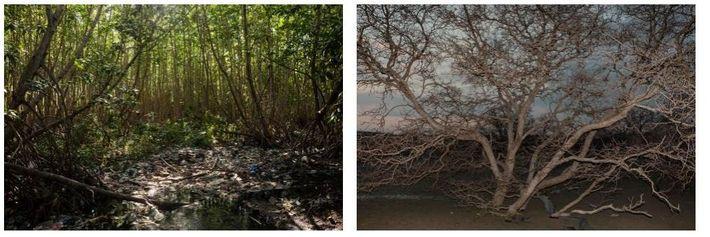 Esquerda: Perto de Tahura Ngurah Rai, as zonas húmidas intocadas estão poluídas com lixo plástico. Direita: Gede ...
