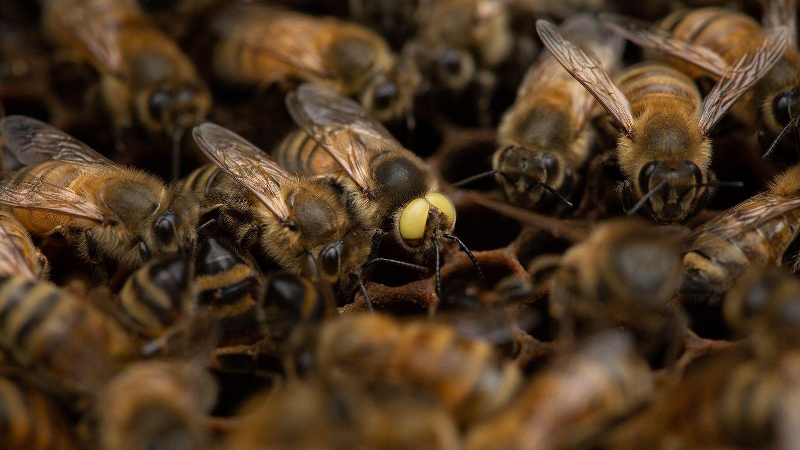 """""""Cuido de abelhas desde 1976 e esta é a primeira vez que vejo algo assim"""", diz ..."""