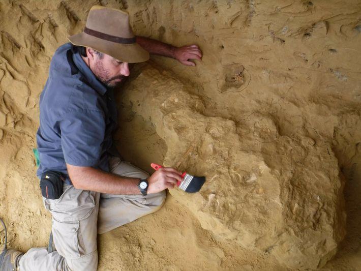 O paleontólogo Octávio Mateus escava o esqueleto de Cardiocorax mukulu em Angola.