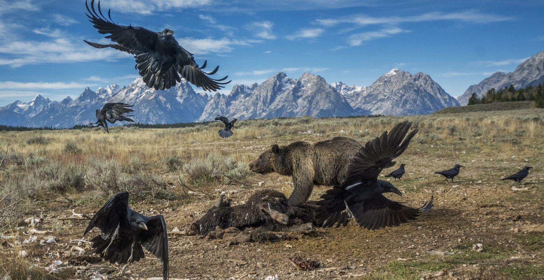 PARQUE NACIONAL GRAND TETON, EUA – Enviado para o Wyoming em 2014, o fotógrafo britânico Charlie ...