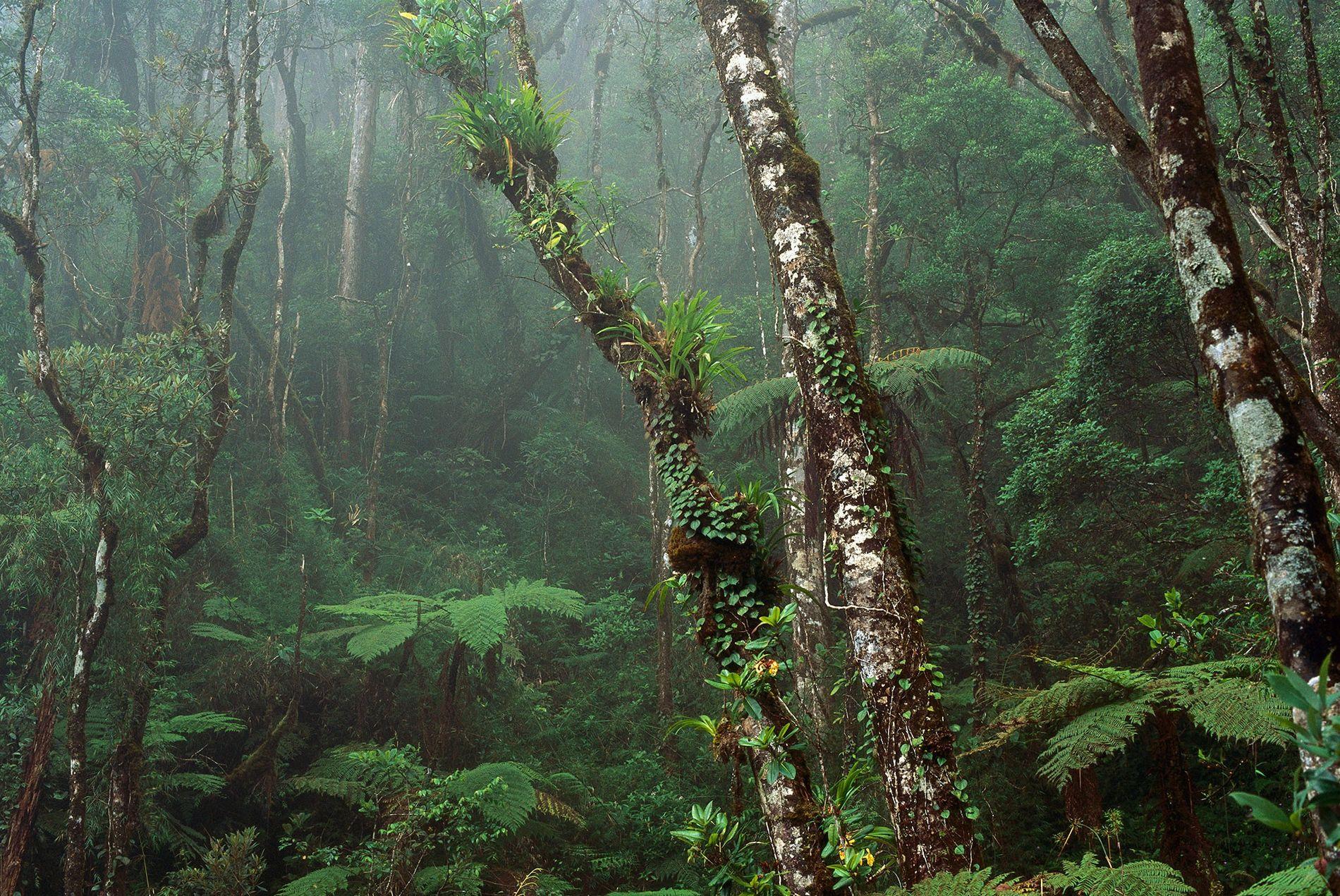 Uma floresta nublada cobre as montanhas na Malásia, no Bornéu. O território da ilha divide-se em ...