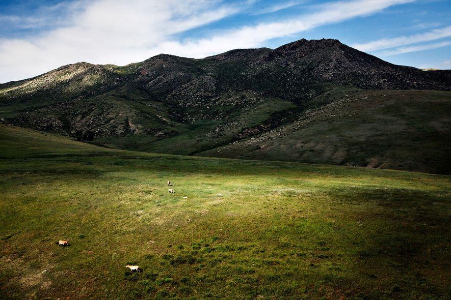 Cavalos selvagens pastam numa pradaria da Mongólia. A National Geographic organiza passeios que permitem aos visitantes ...