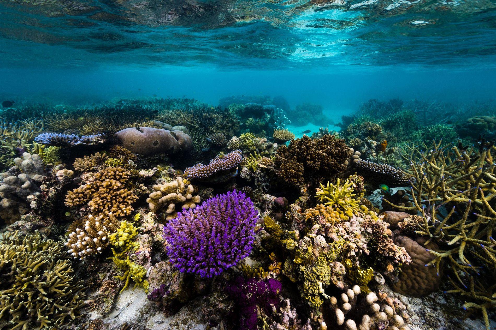 A Papua Nova Guiné é conhecida pela sua biodiversidade, quer em terra, como em mar.