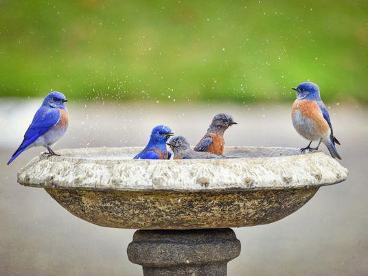 Um quintal 'para os pássaros' também é ótimo para as crianças