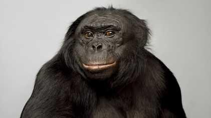 14 Animais que Demonstram Uma Inteligência Impressionante