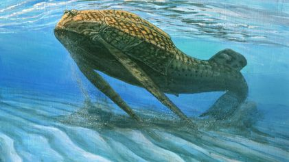 Peixe com 400 milhões de anos sugere que os ossos evoluíram para agir como baterias
