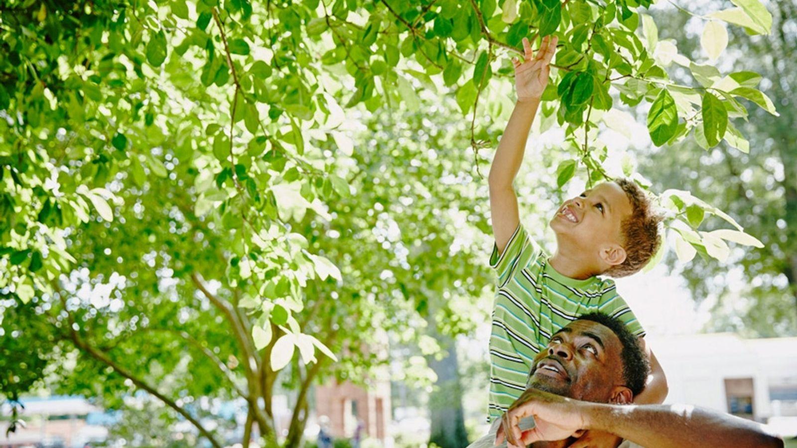 Pai e filho exploram a natureza