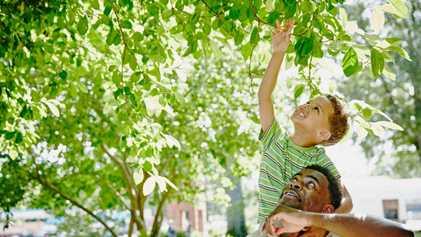 As árvores da cidade podem ser benéficas para os cérebros das crianças