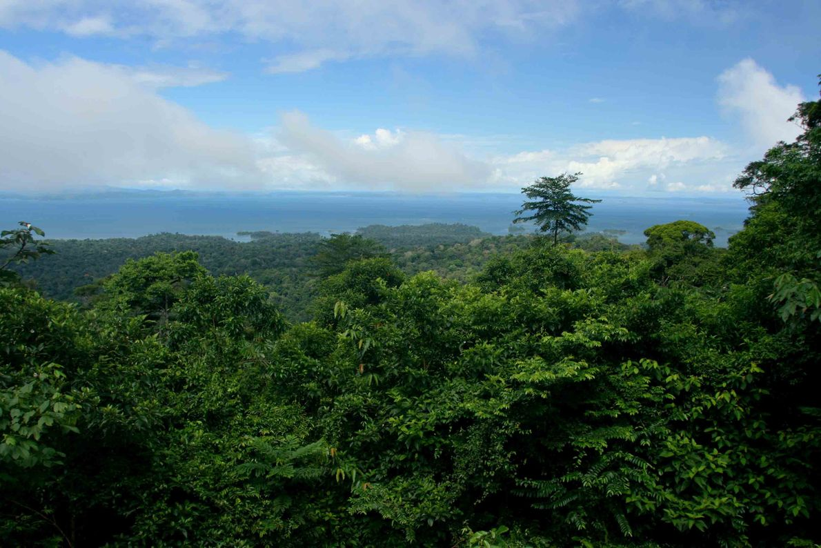 Parque Natural de Brownsberg, Suriname