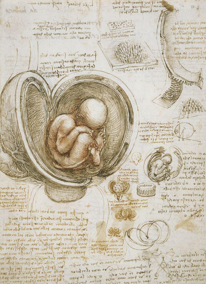 Leonardo era um anatomista muito talentoso cujas dissecações e observações apuradas figuravam nas suas imagens do ...
