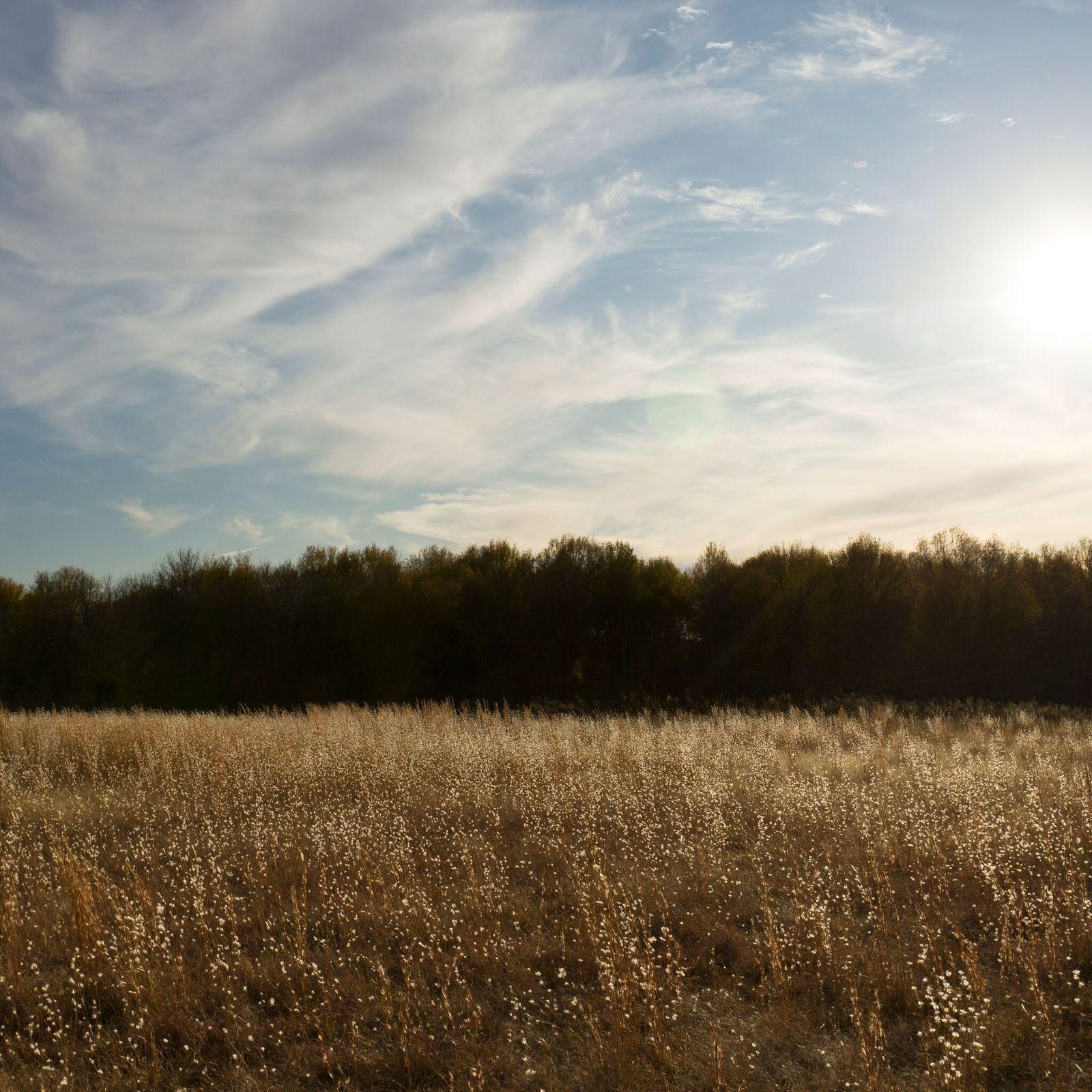 """Quando foram descobertos em 1935, os Montes Spiro de Oklahoma foram apelidados de """"túmulo do Rei ..."""
