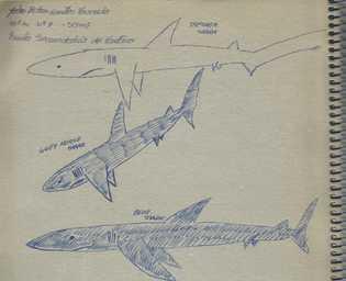 Imagem de um caderno com alguns desenhos de tubarões.