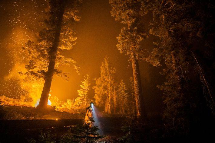 Este ano, a Califórnia sofreu a sua pior época de incêndios de que há registo. Nesta ...