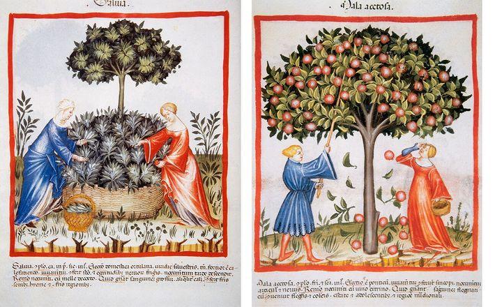 manual europeu do século XIV