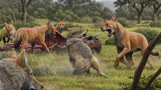 Os 'Lobos Gigantes' Existiram – e Eram Ainda Mais Estranhos do que Pensávamos