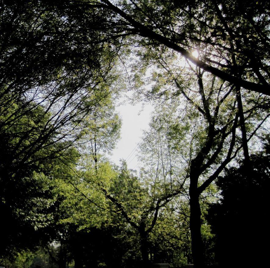 Copas de árvores.
