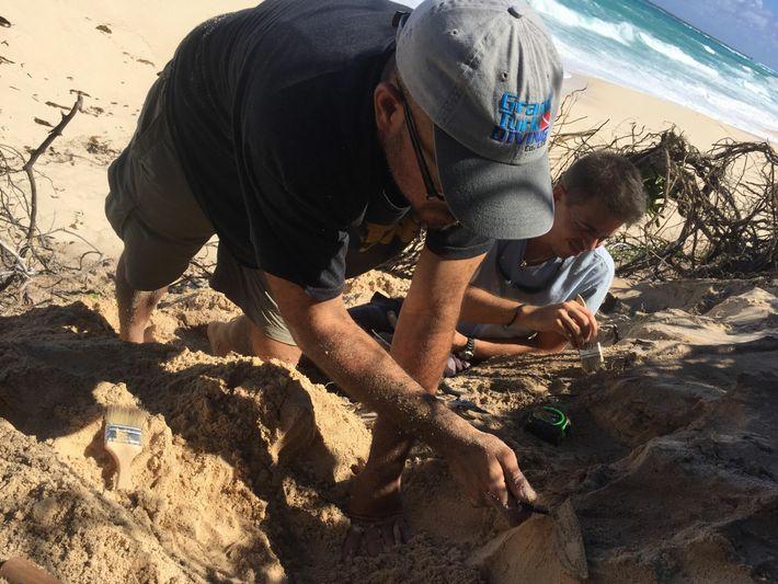 O arqueólogo Michael Pateman e Anthony Maillis, um habitante local, começam a escavar uma duna em ...