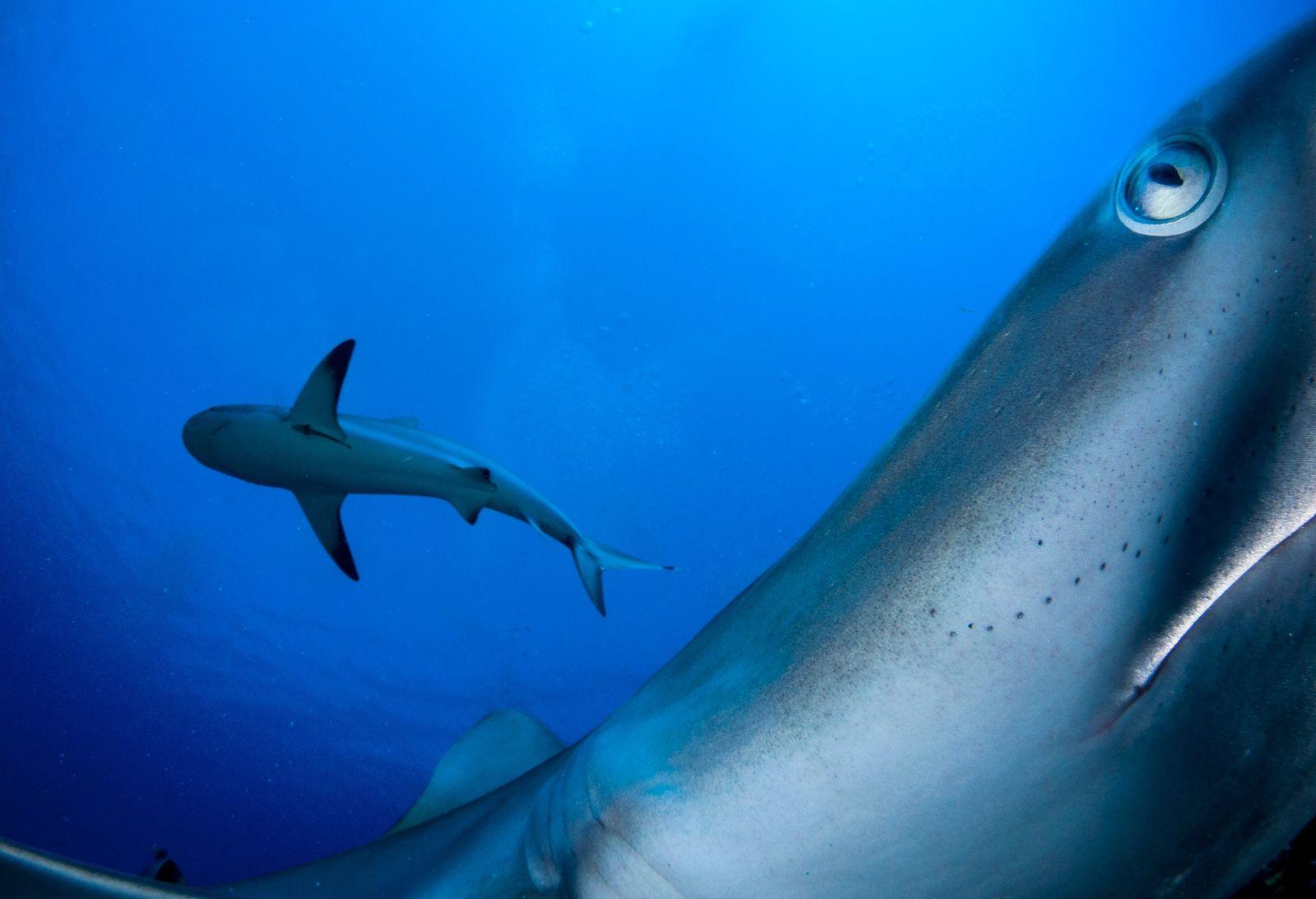 Imagens Extraordinárias Levam-no ao Fundo do Mar