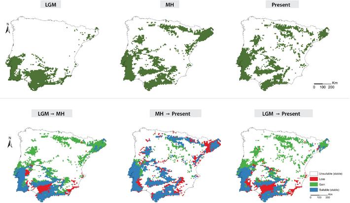 Distribuição das espécies de carvalhos marcescentes