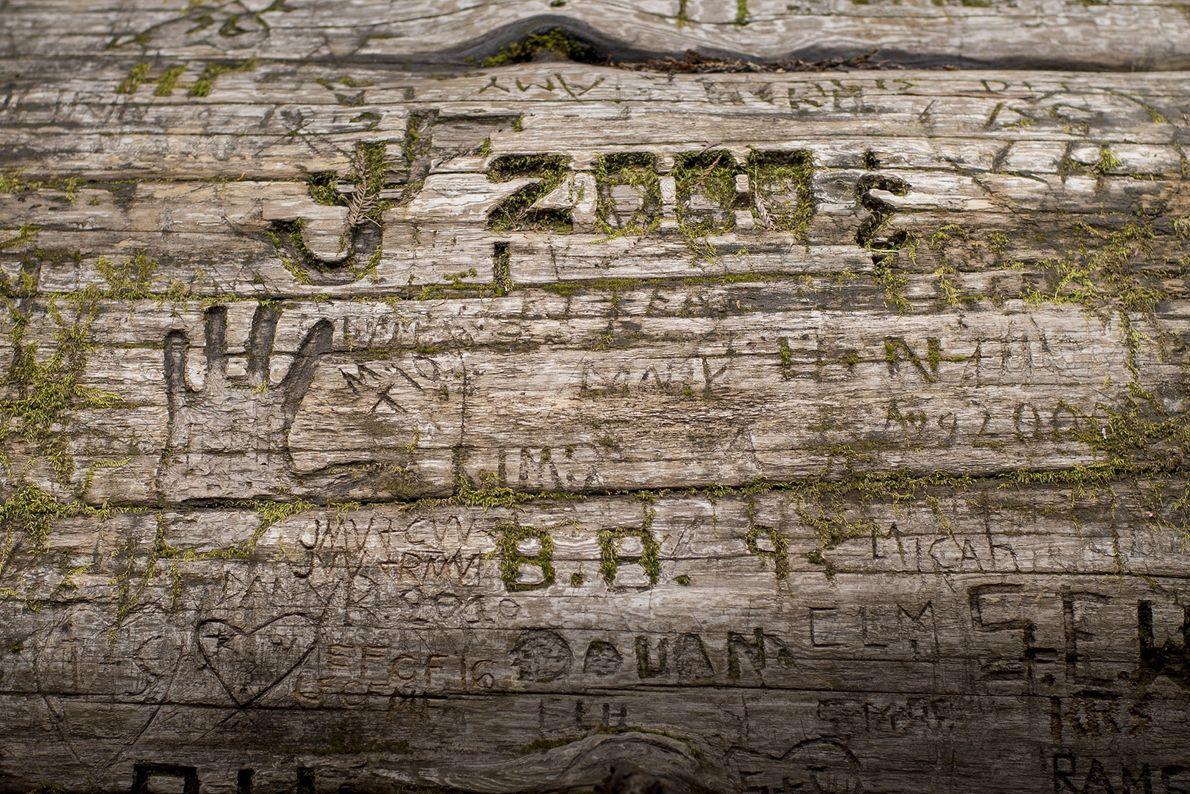 símbolos esculpidos na casca de uma sequoia