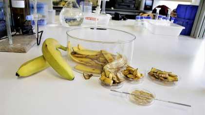 Sabia que as Cascas de Banana Purificam Água Contaminada?