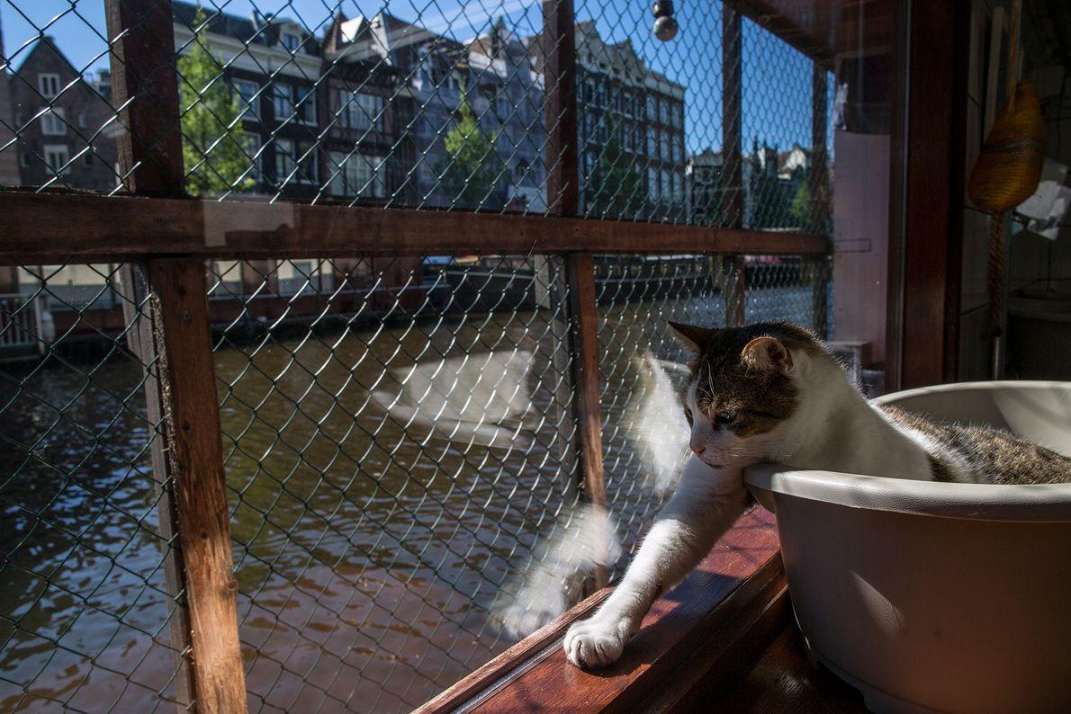 Um gato com oito anos goza o sol no convés do Catboat.