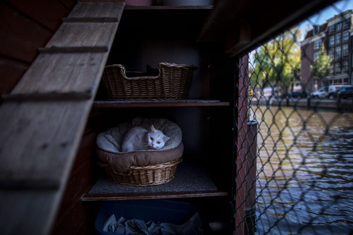 Uma gata descansa aninhada num cesto