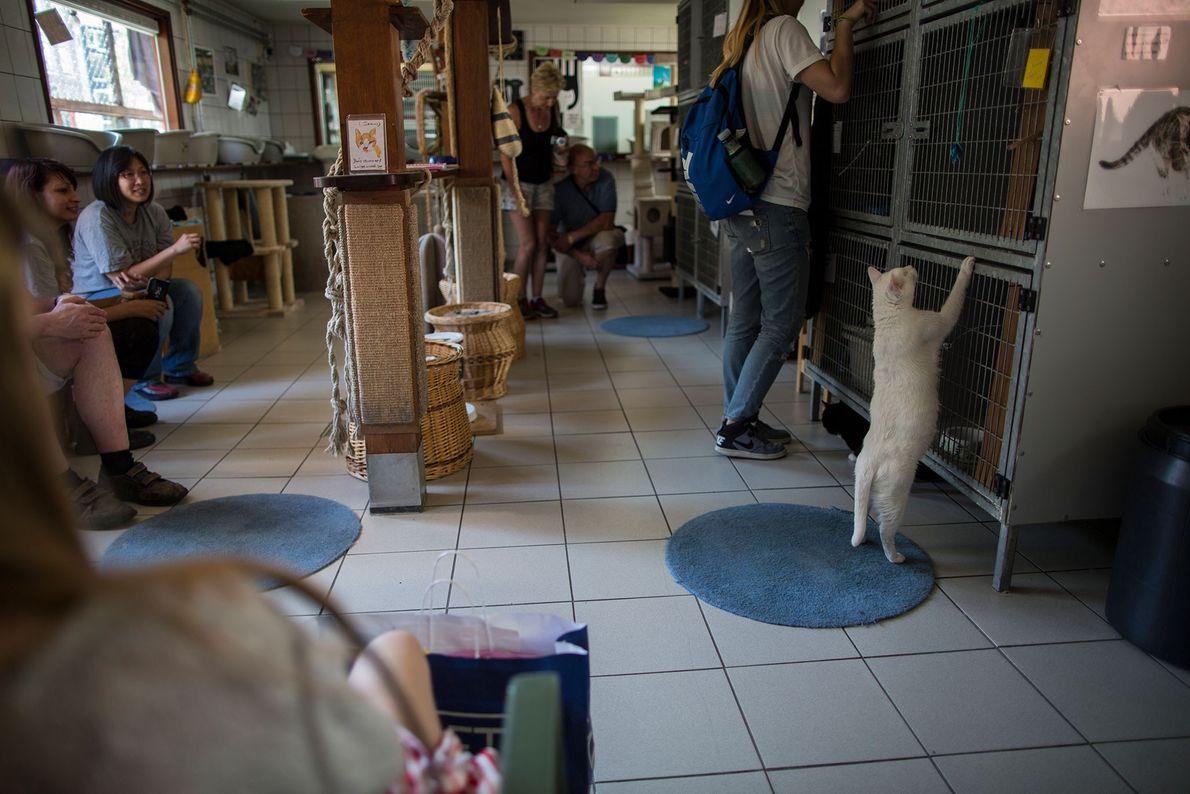 Milhares de pessoas visitam todos os anos o Catboat.