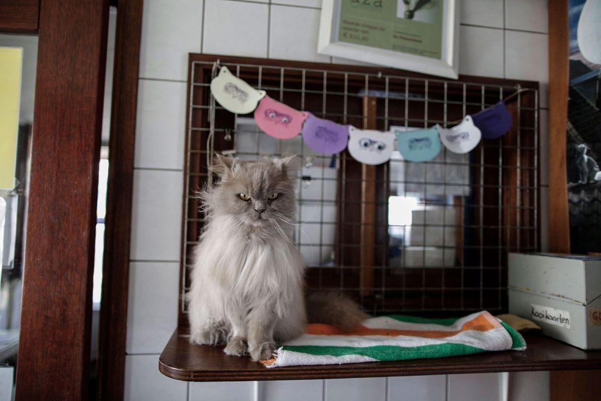 Kasumi aguarda que um voluntário lhe escove o pelo.