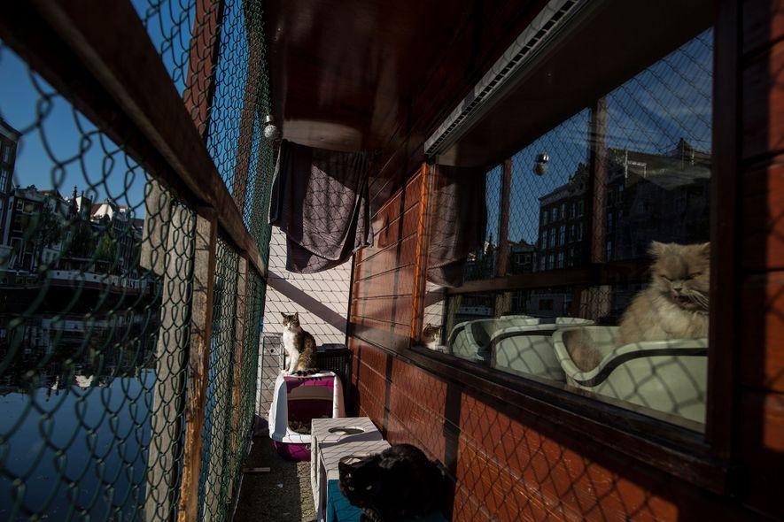 Bem-Vindo ao Catboat, o Único Santuário de Animais Flutuante do Mundo
