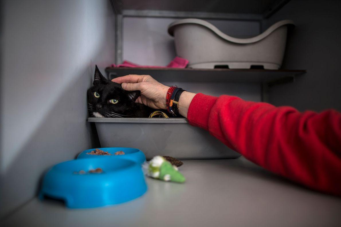 Diagnosticado com uma depressão, Eddy, um gato com 13 anos, aninha-se no cesto.