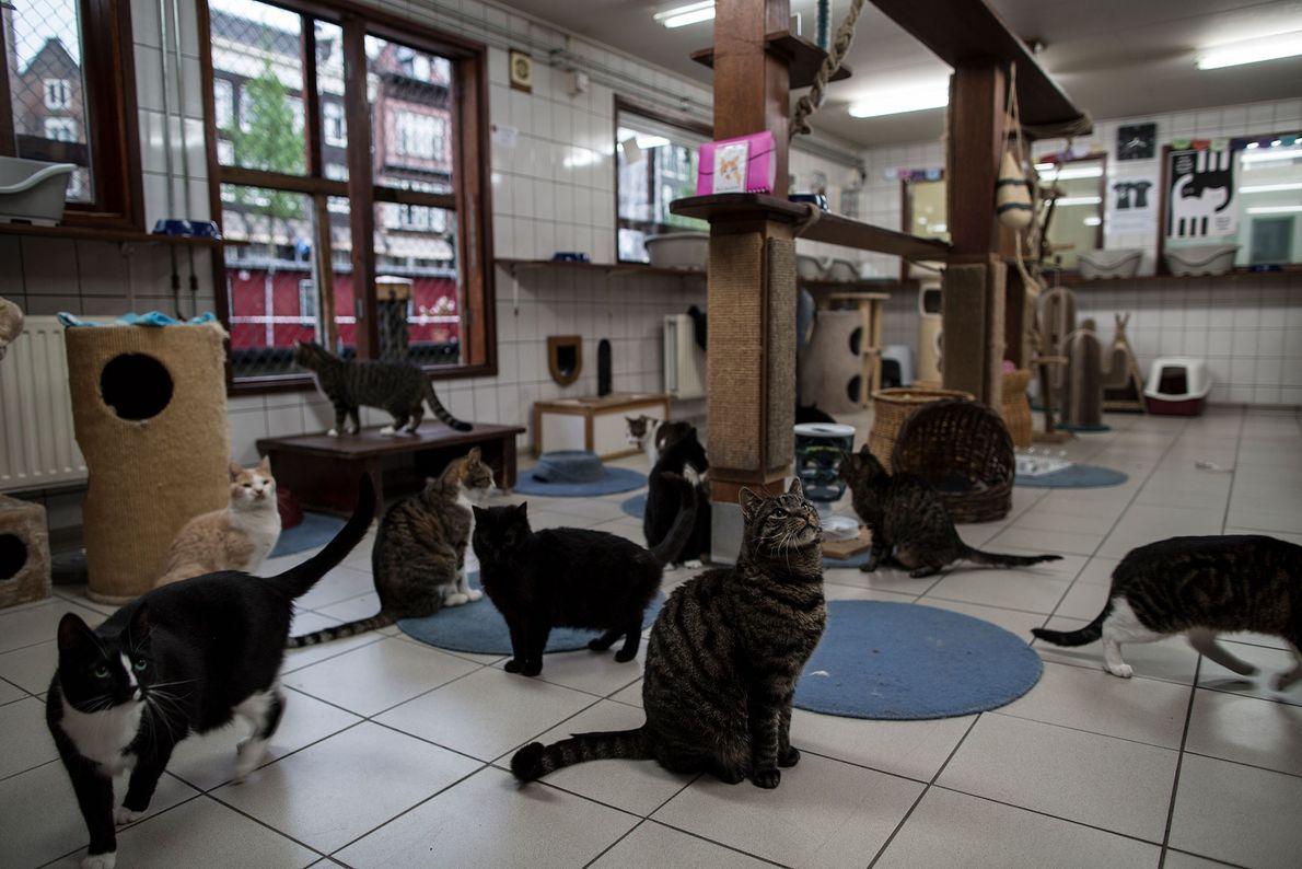 Os gatos reúnem-se à hora da refeição a bordo do Catboat.