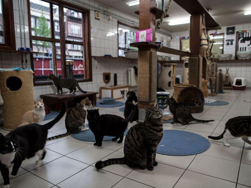 Fotografias do Catboat, o Único Santuário de Animais Flutuante do Mundo