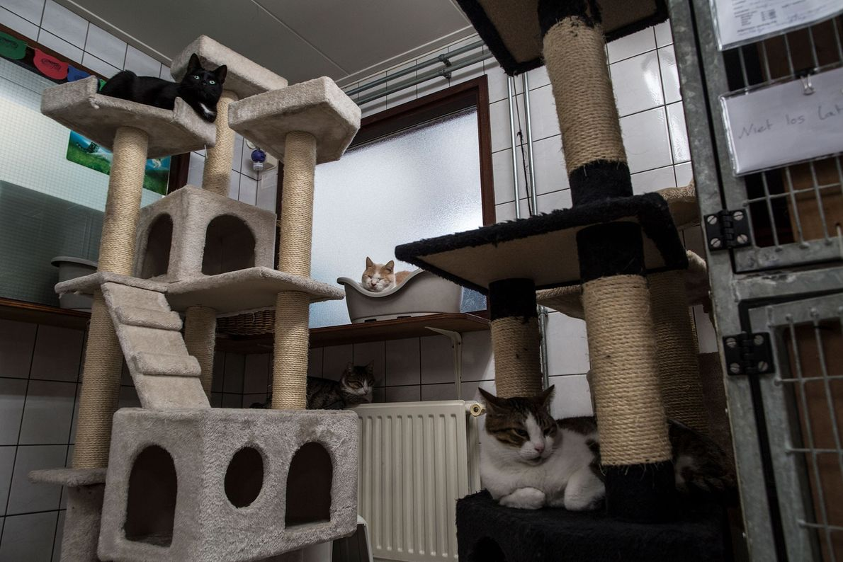 Alguns gatos a descansar.