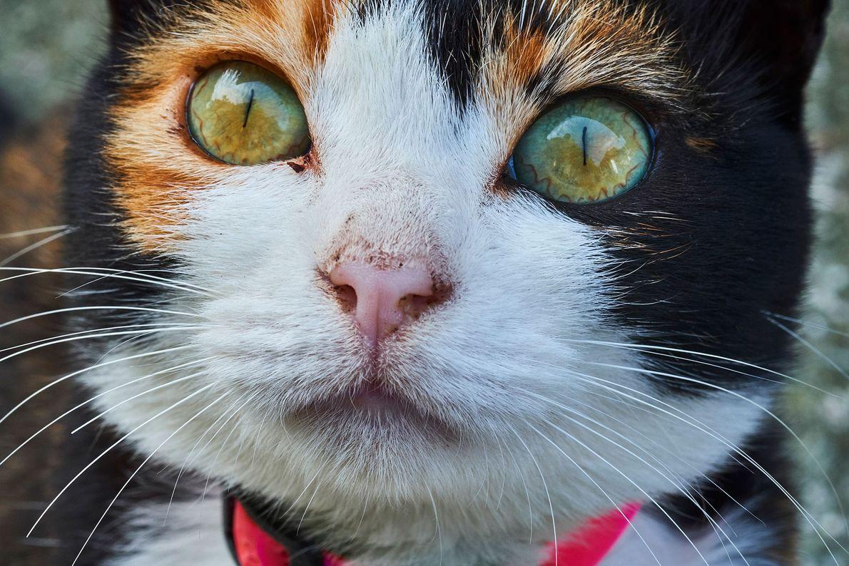 """Aoshima, também conhecida no Japão como """"Ilha dos Gatos"""", tem até dez vezes mais gatos do ..."""