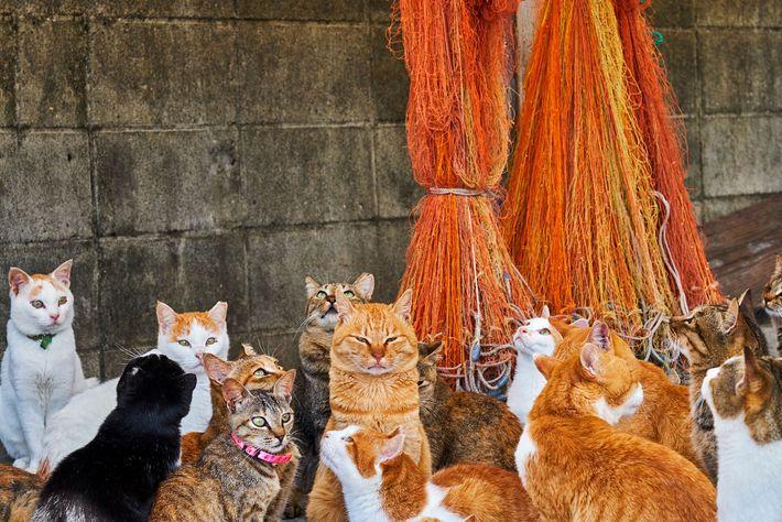 """Estes felinos vivem numa """"ilha de gatos"""""""