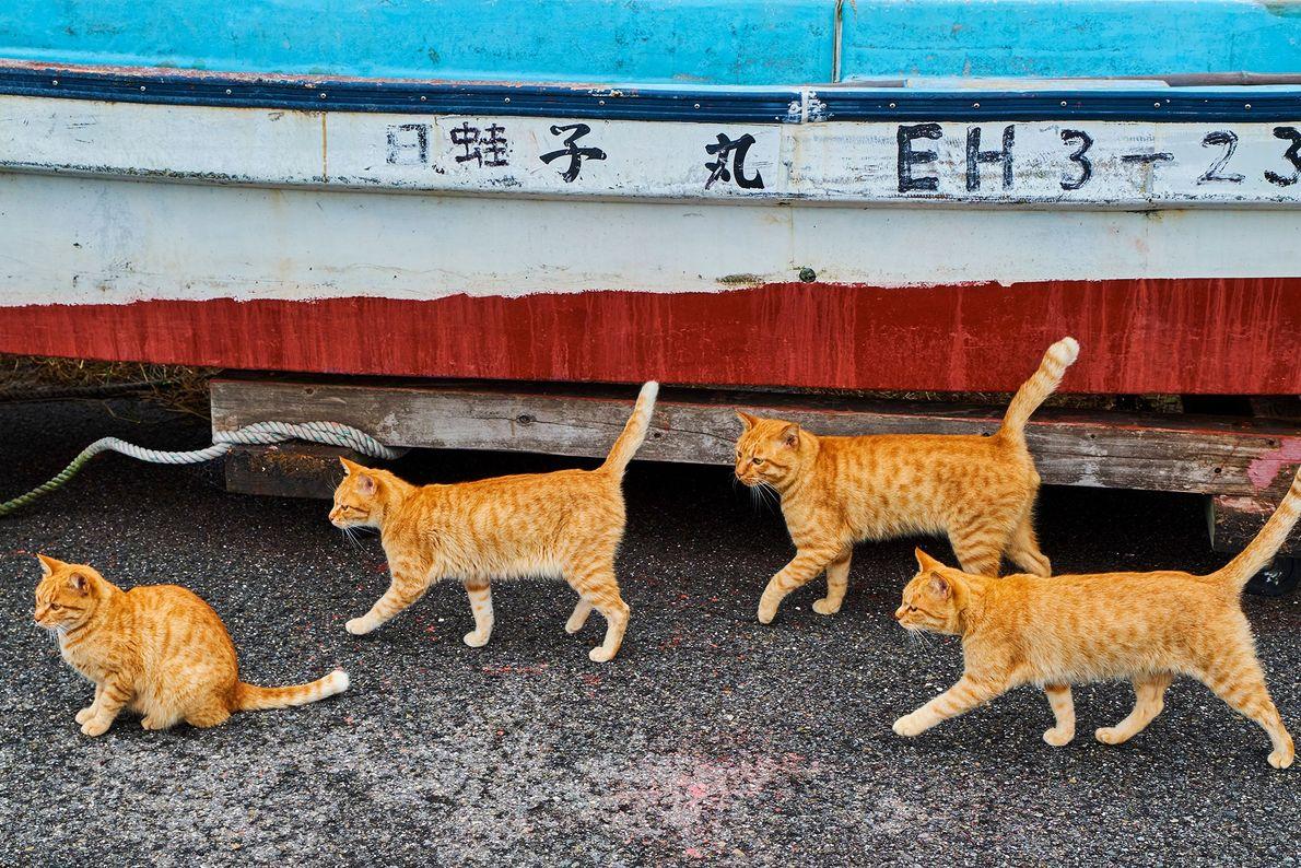 Gatos malhados passeando junto a um barco de pesca no Japão, onde os gatos gozam de ...