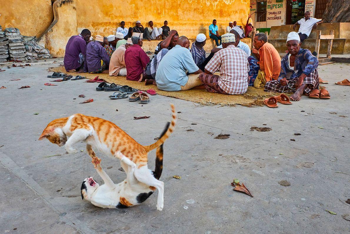 Gatos lutando na brincadeira ao lado dos habitantes indiferentes em Lamu, no Quénia.
