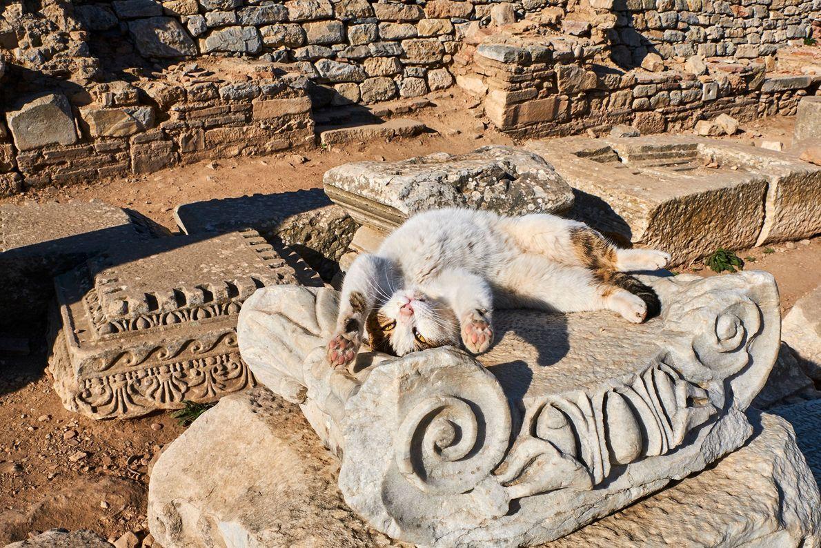 Um gato brincalhão espreguiça-se ao sol nas ruínas turcas. O Islão é a religião predominante na ...