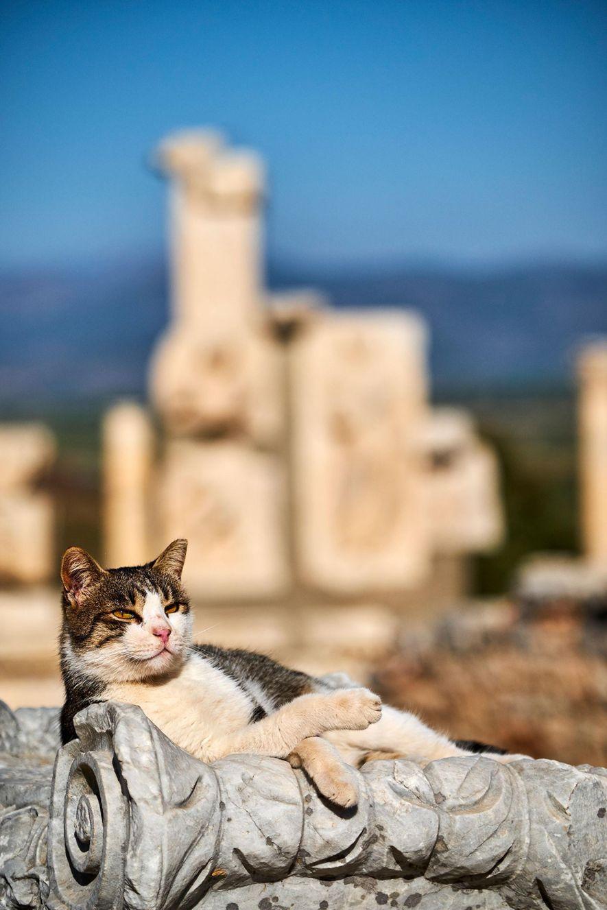 Um gato a relaxar encostado a uma das ruínas de Éfeso, sítio arqueológico de uma cidade ...