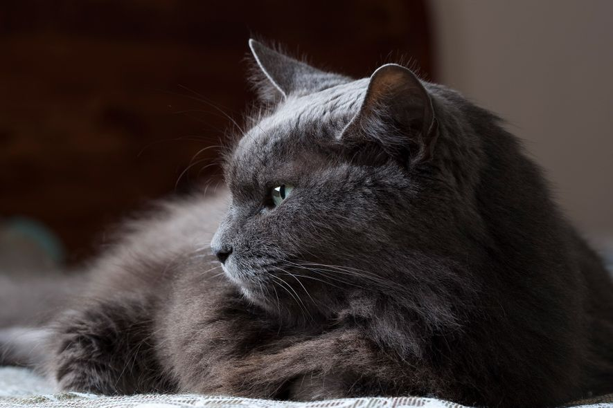 Os gatos são muitas vezes encarados como sendo insondáveis, mas é provável que tenham formas subtis ...